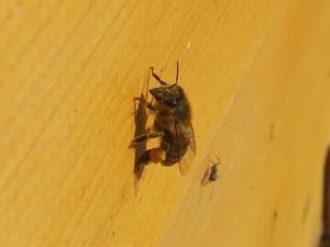 Haben Bienen Langeweile?