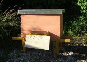 Drittes Bienenvolk einlogiert