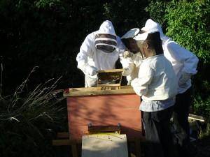 Neuigkeiten von den Stadtbienen