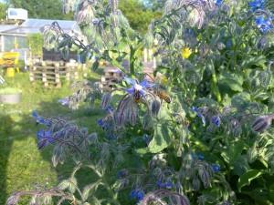o'pflanzte Impressionen aus Sonnenblumes Blog