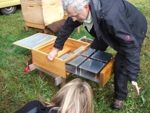 Bienensauna – ein neuer Weg?