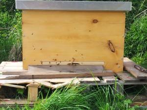 Arbeitsweise naturfarbener Bienenstock