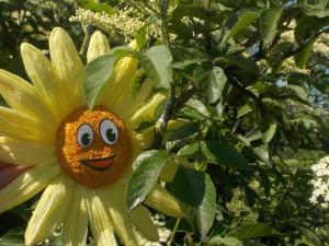 Anfangsbild Sonnenblume klein
