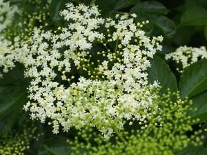 Rückblick: Heilpflanzenkurs im Juni