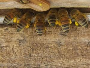 Auftaktveranstaltung Stadtbiene 2.0 reloaded