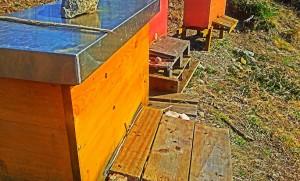 Vom Land wo der Honig fließt