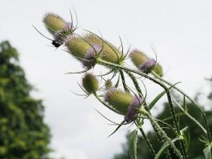 Heilpflanzenkurs im Oktober