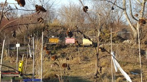 Winter-Sonnwend-Bienen