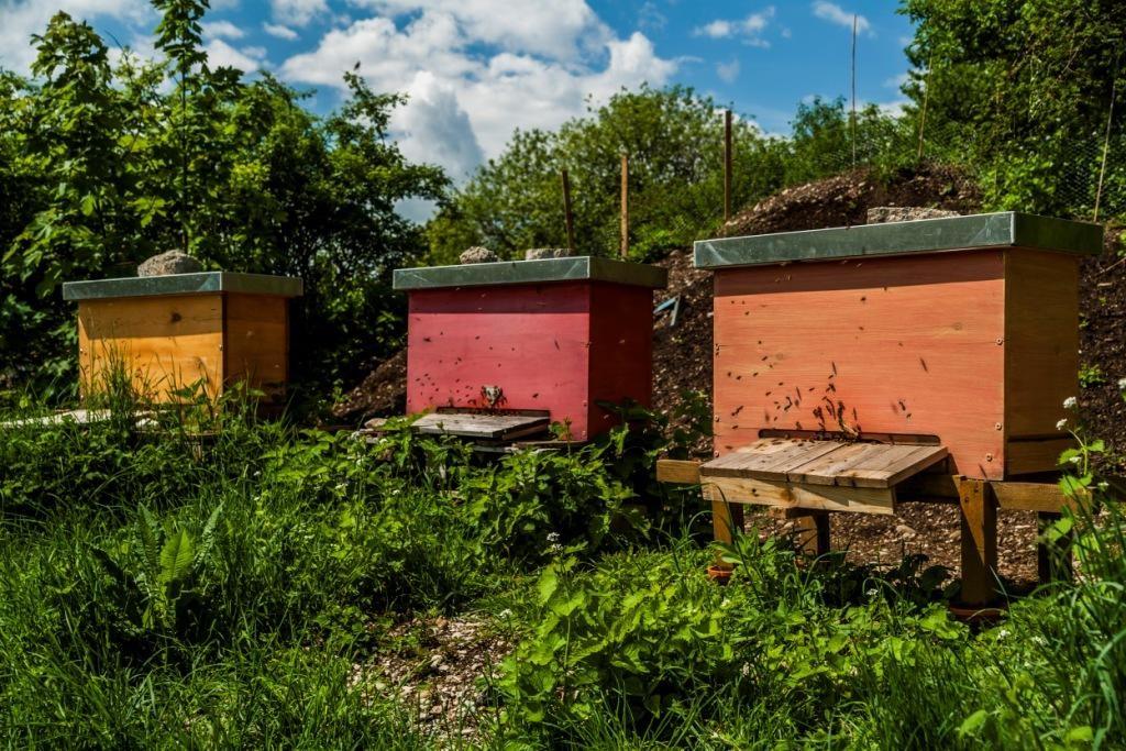 """Deutschland, Bayern, München, Urban Gardening, Projekt """"o-pflanzt-is!"""" Bienen"""