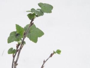 Heilpflanzenkurs im März