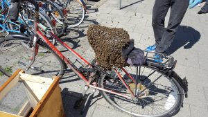 Echte Schwabinger Stadtbienen gehen sonntags gerne flanieren