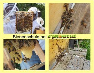 Bienenschule bei o'pflanzt is!
