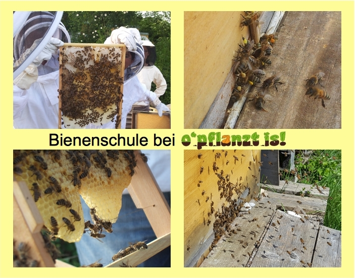 Bienenschule Collage