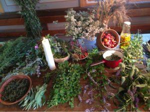 27. August Heilpflanzenkurs