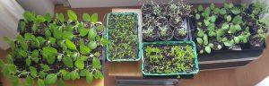 13. Mai Maipicknick und Pflanzenbörse
