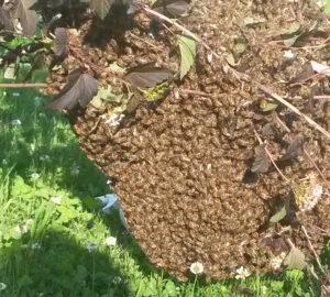 Die o'pflanzt is! Bienen im Magazin fluter