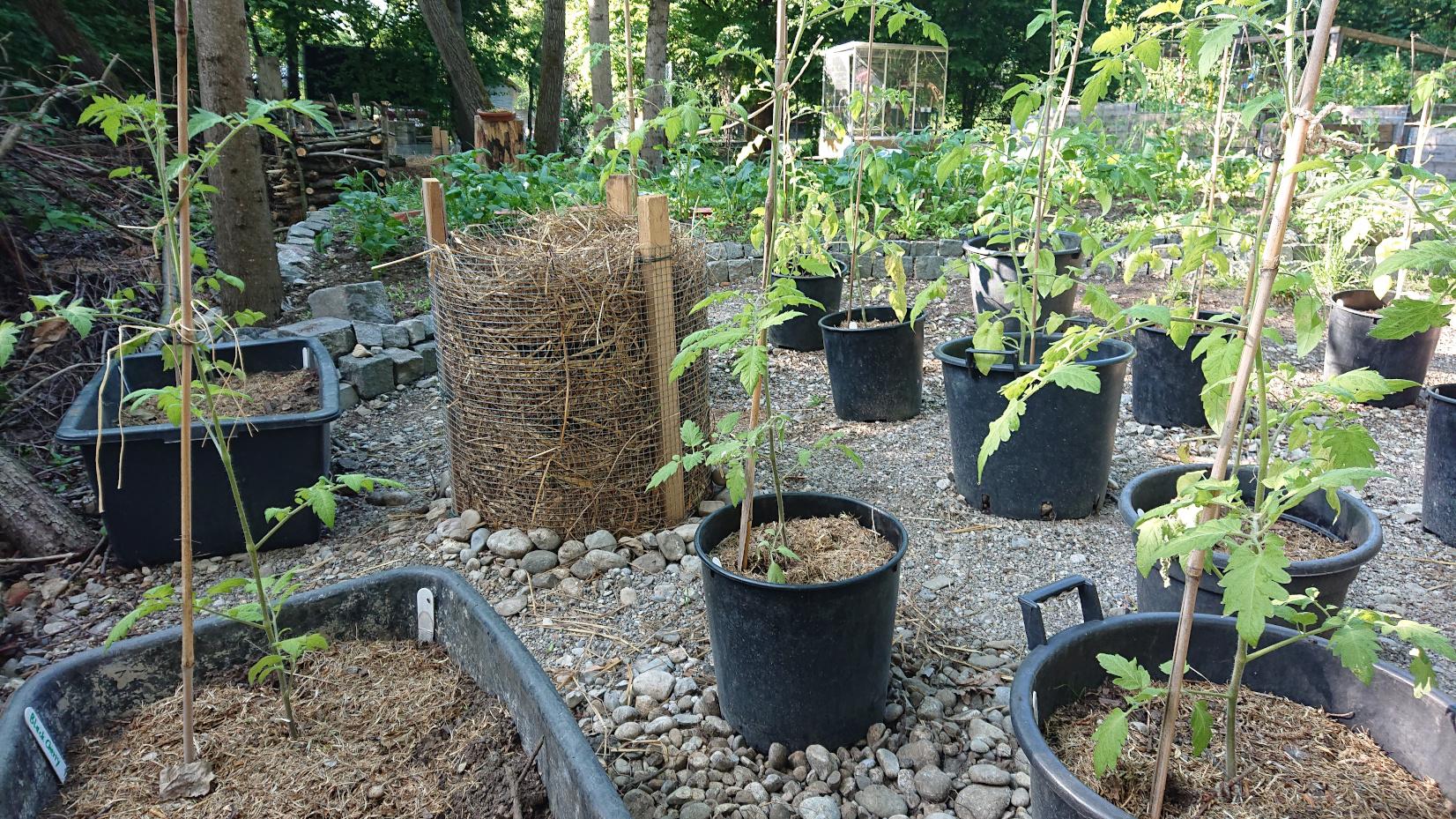 Tomaten, Paprika, Kartoffeln und mehr ...