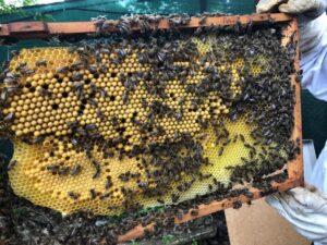 Basics zu den Bienen: Bienenbeute, Brut und Schwärmen
